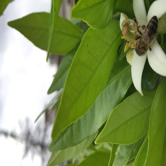 Découverte du monde des abeilles